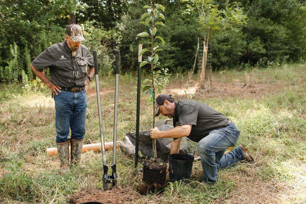 Dr. Deer overseeing a tree transplant