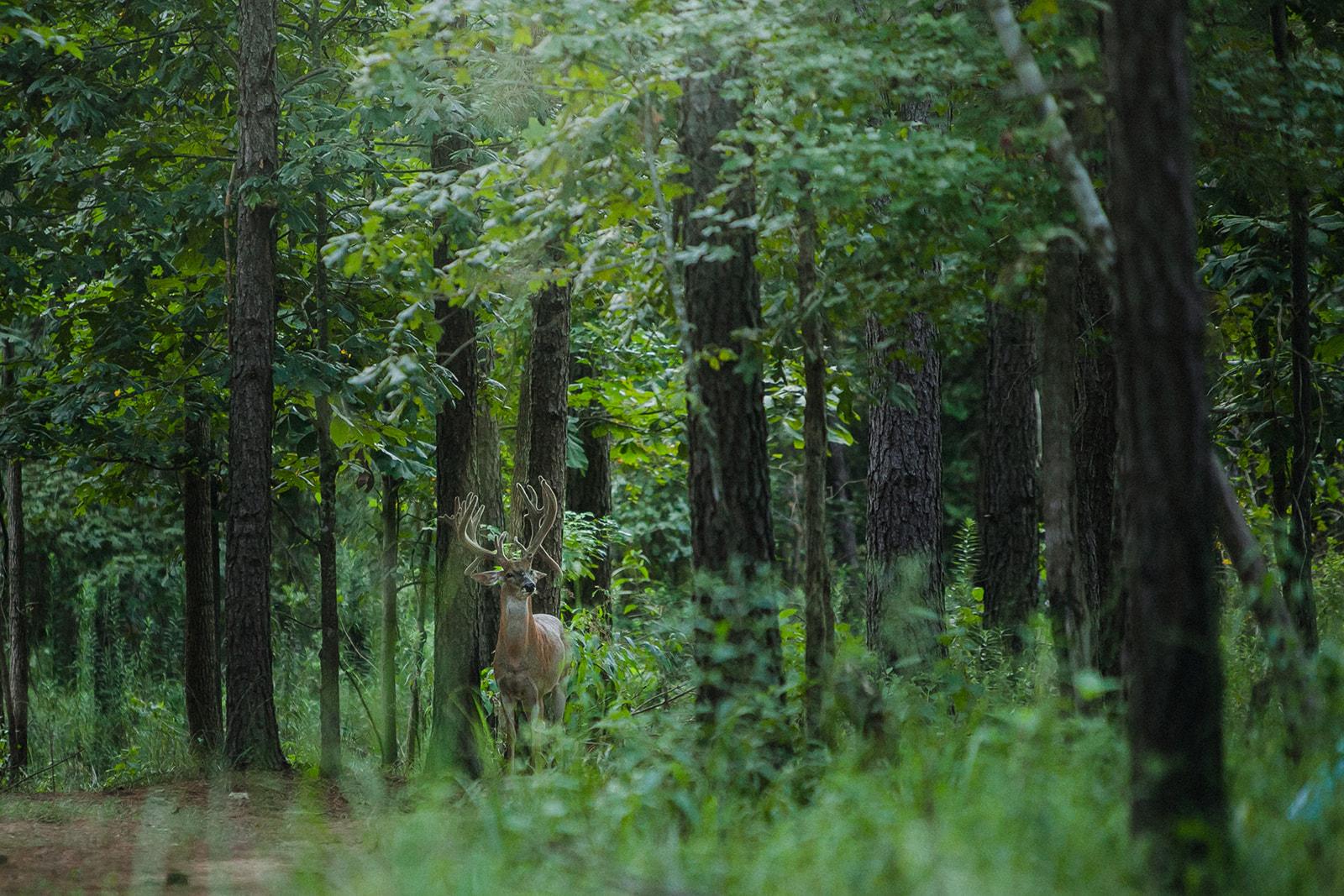Buck Forage, Wildtree Partnership Excites Hunters